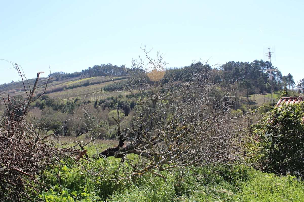 Plot for construction close to Óbidos