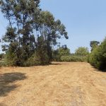 Foz do Arelho land authorised for construction of 3 houses